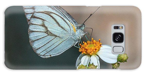 Striped Albatross Butterfly Dthn0209 Galaxy Case