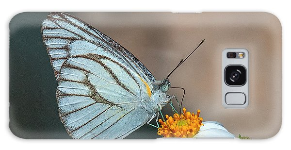 Striped Albatross Butterfly Dthn0209 Galaxy Case