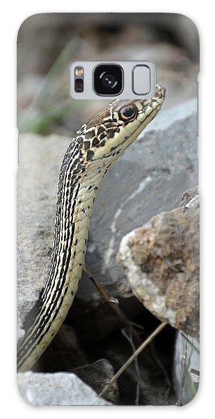 Striped Whipsnake, Masticophis Taeniatus Galaxy Case
