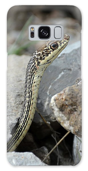Striped Whipsnake, Masticophis Taeniatus Galaxy Case