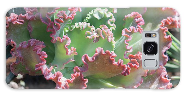 Galaxy Case - Succulent Series II by Suzanne Gaff