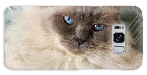 Sugar My Ragdoll Cat Galaxy Case
