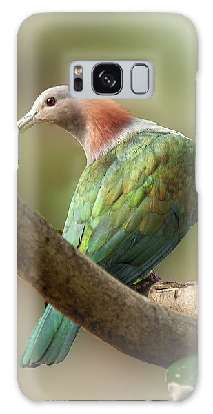 Sulawesi Green Imperial Pigeon Galaxy Case