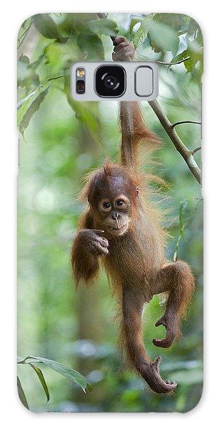 Sumatran Orangutan Pongo Abelii One Galaxy Case