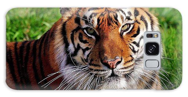 Sumatran Tiger  Galaxy Case