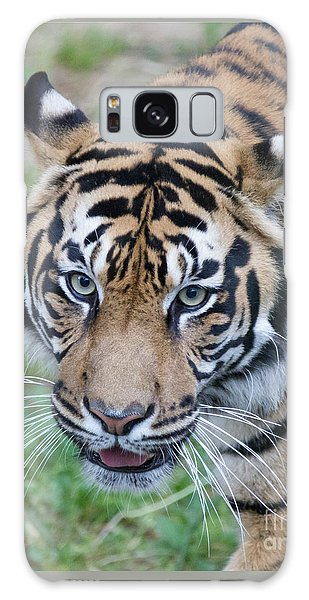 Sumatran Tiger Galaxy Case