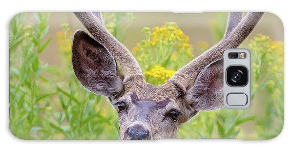Summer Mule Deer Galaxy Case