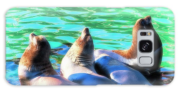 Sun Basking Seals Galaxy Case