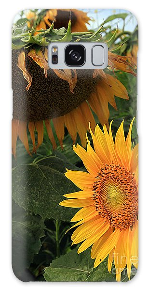 Sun Flowers  Past  And  Present  Galaxy Case