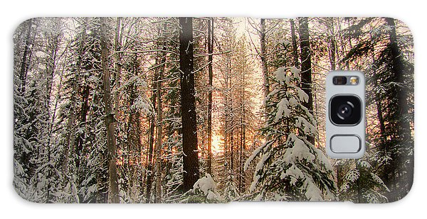 Sun Of Winter Trees Galaxy Case