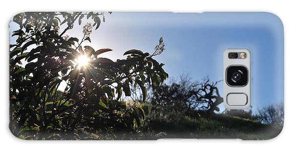 Galaxy Case featuring the photograph Sun Shines Through The Greenery by Matt Harang