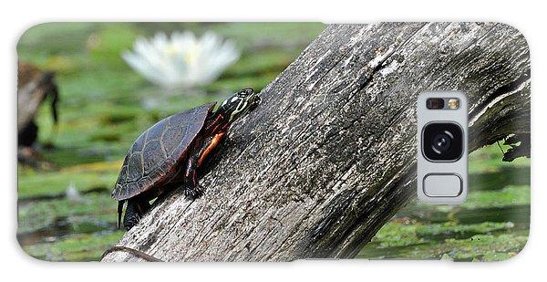 Turtle Sunbathing Galaxy Case by Glenn Gordon