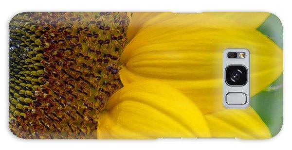 Sunflower Closeup Galaxy Case