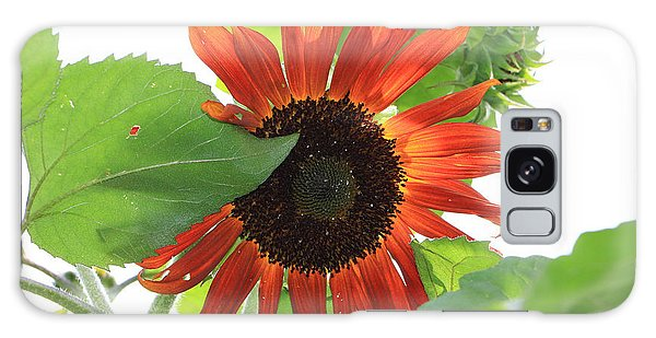 Sunflower In The Afternoon Galaxy Case