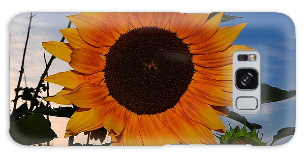 Sunflower In The Evening Galaxy Case