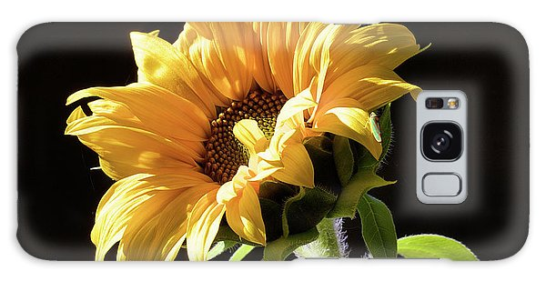 Sunflower Isloated On Black Galaxy Case