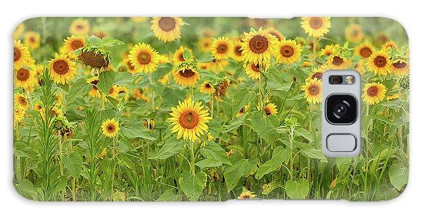 Sunflower Patch Galaxy Case