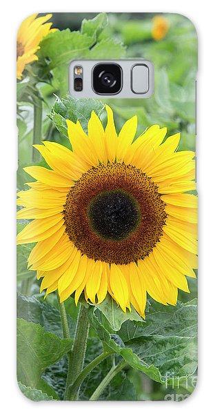 Helianthus Annuus Galaxy Case - Sunflower Ronnie by Tim Gainey