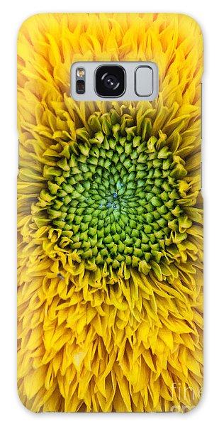 Helianthus Annuus Galaxy Case - Sunflower Teddy Bear by Tim Gainey