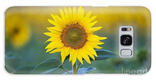 Sunflower Galaxy S8 Case - Sunflower by Tim Gainey