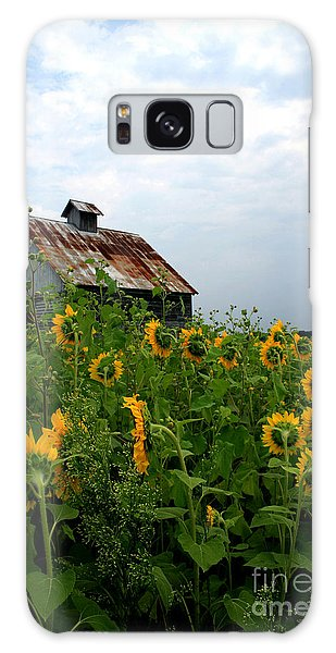 Sunflowers Along Rt 6 Galaxy Case