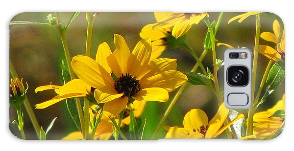 Sunflowers Along The Trail Galaxy Case by Barbara Bowen