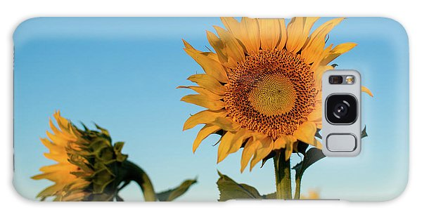 Sunflowers At Sunrise 1 Galaxy Case