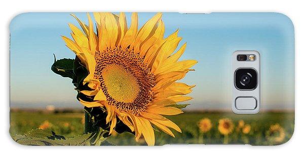 Sunflowers At Sunrise 2 Galaxy Case