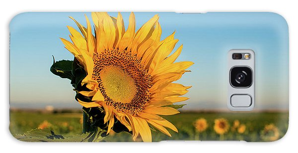 Sunflowers At Sunrise 2 Galaxy Case