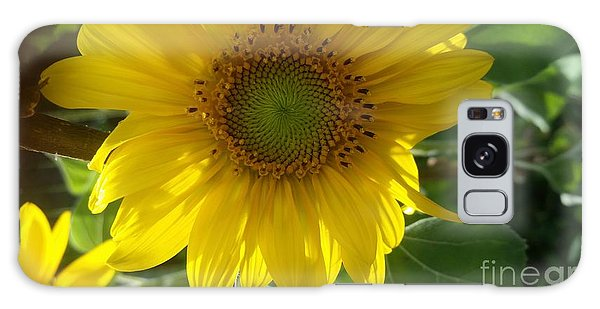 Sunflowers-just Bloomed Galaxy Case