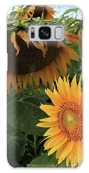 Sunflowers Past And Present Galaxy Case