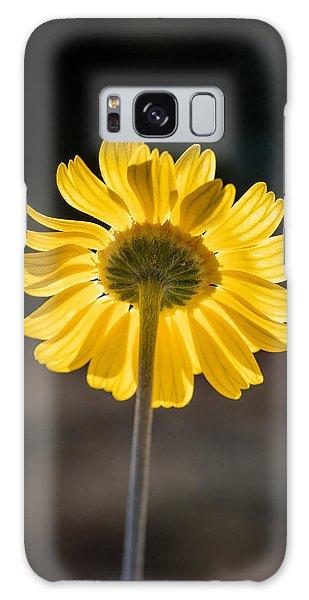 Sunlit Four-nerve Daisy  Galaxy Case