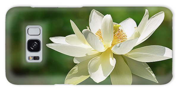 Sunlit Lotus Blossom Galaxy Case