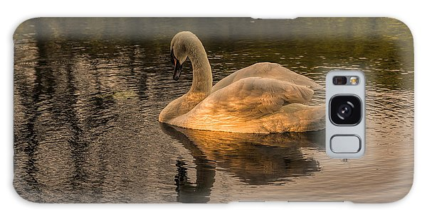 Sunlit Mute Swan  Galaxy Case by David  Hollingworth