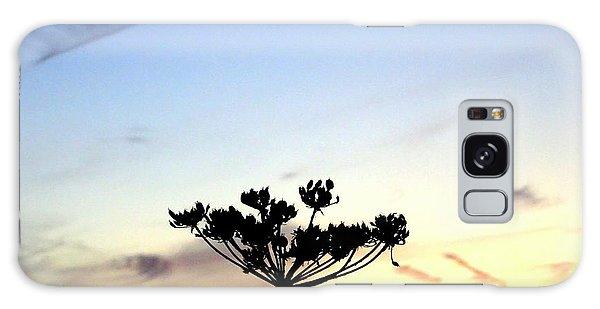 Sunset Seedhead Silhouette  Galaxy Case