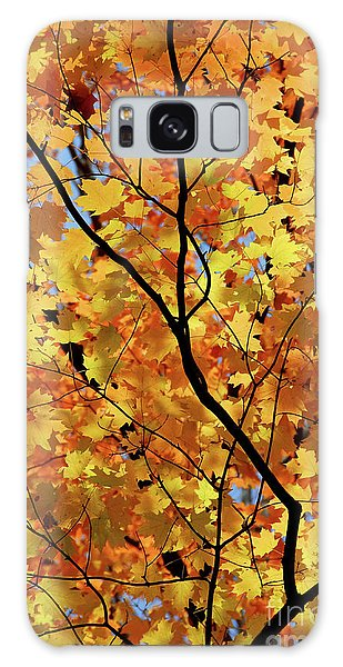 Galaxy Case featuring the photograph Sunshine In Maple Tree by Elena Elisseeva