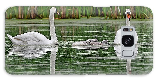 Galaxy Case featuring the photograph Swan Family by Ken Stampfer