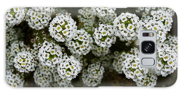 Sweet Alyssum Galaxy Case