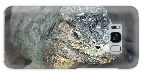 Galaxy Case featuring the photograph Sweet Face Of Rhinoceros Iguana by Miroslava Jurcik