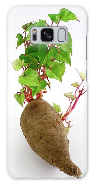 Sweet Potato Galaxy Case by Gaspar Avila