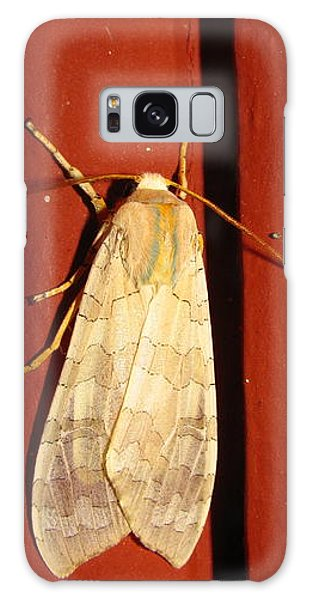Sycamore Tussock Moth Galaxy Case