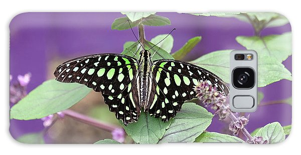 Tailed Jay Butterfly In Puple Galaxy Case