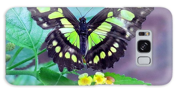 Tailed Jay Visits Lantana Galaxy Case