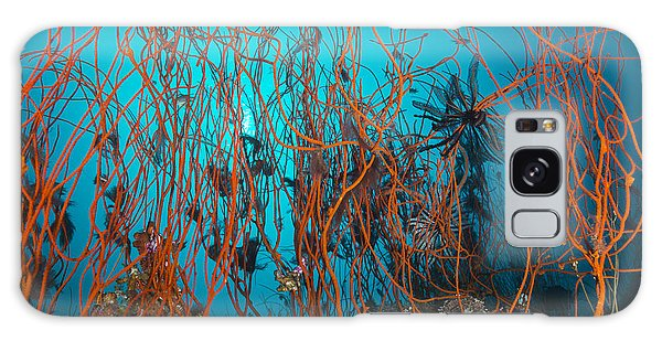 Feather Stars Galaxy Case - Tangle Of Wiry Red Corals With Black by Mathieu Meur