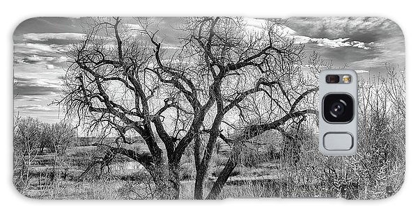 Tangled Old Tree On Platte River Galaxy Case