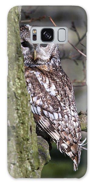 Tawny Owl In A Woodland Galaxy Case