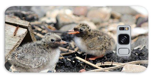 Tern Chicks Galaxy Case by David Grant