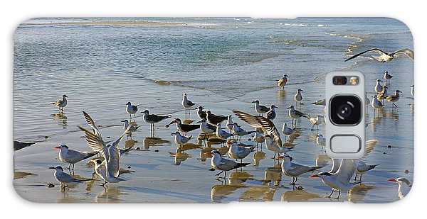 Terns And Seagulls On The Beach In Naples, Fl Galaxy Case