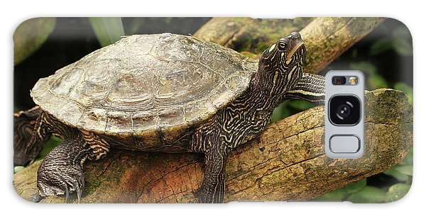 Tess The Map Turtle #3 Galaxy Case