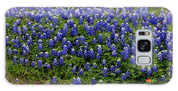 Texas Bluebonnets #0484 Galaxy Case by Barbara Tristan
